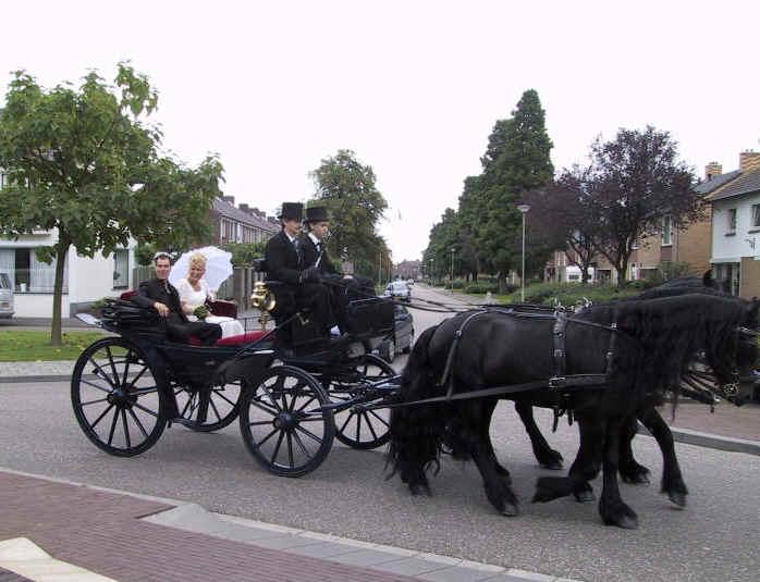 antieke koets bespannen met trojka (driespan) Friese paarden